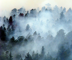Where there's Smoke, there's Fire (Sandra Leidholdt) Tags: trees usa mountains nature america forest fire us colorado unitedstates smoke explore burning american rockymountains forestfire smoky frontpage rauch fume amricain explored sandraleidholdt leidholdt sandyleidholdt