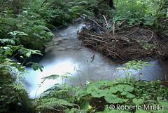 Specchio d'acqua (Roberto Mirulla) Tags: italia acqua trentino fiumi torrenti