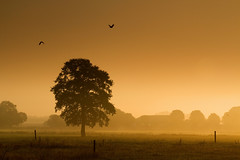 a new day....    * explore * (dewollewei) Tags: morning light mist tree fog sunrise landscape image getty overijssel gettyimages gettyimage serenitynow beerze magicofnature platinumheartaward