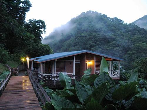 en pequeñas casas de madera, en medio del bosque tropical. Y de