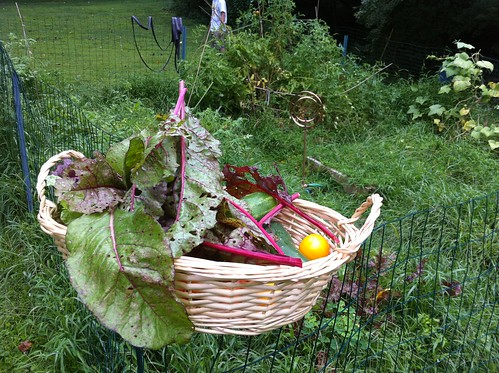 Messy Garden and Basket of Goodies