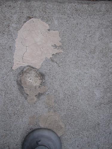 Sidewalk Dog Sidewalk
