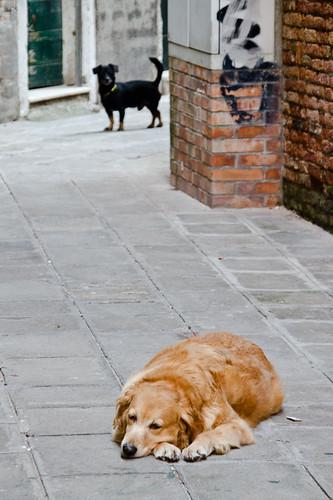 callejera-italia-010