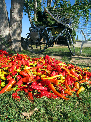 Paprika + bicycles
