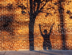 Shadows on the Bricks - Red Hook, Brooklyn (ChrisGoldNY) Tags: nyc newyorkcity trees sunset summer usa newyork brooklyn america shadows forsale bricks albumcover gothamist bookcover redhook magichour rosepetal flickrchallengegroup challengewinners thechallengegame challengegamewinner creativecommonscentral chrisgoldny chrisgoldberg chrisgold chrisgoldphoto chrisgoldphotos