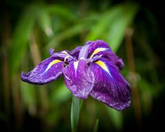 Glendurgan Gardens-3.jpg (David Wint) Tags: england cornwall mawnansmith glendurgangarden