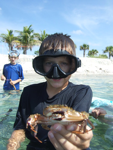 Alex's Big Swimming Crab