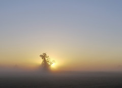 Misty sunrise Sep 03 2010 (yvonnepay615) Tags: uk mist tree nature silhouette sunrise landscape lumix countryside norfolk panasonic explore g1 pancake 20mm eastanglia mywinners 43365 platinumheartaward pinnaclephotography extraordinarilyimpressive