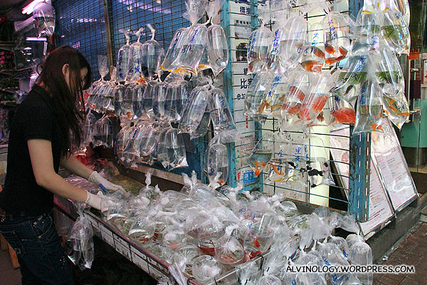 Packing the fishes