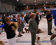 Conception Bay Kennel Club Dog Show