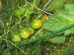 Garden 2010 09 08 003