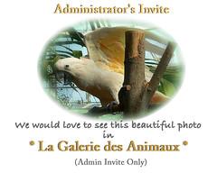 Admin Invite