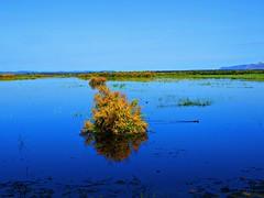 La vida (Jesus_l) Tags: espaa agua europa ciudadreal humedales daimiel tablasdedaimiel jesusl