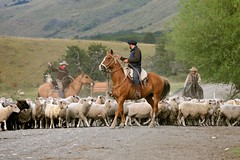 Real Cowboys (Alex E. Proimos) Tags: chile ranch horse patagonia mountains argentina cowboys real tour sheep parks visit el national andes section calafate southernmost aike galope nibepo proimos