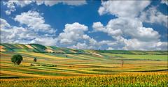 Jovial Vojvodina (Katarina 2353) Tags: serbia vojvodina pannonia spring fields sky srbija katarina2353 katarinastefanovic panorama agriculture