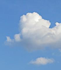 Thursday Colours - A Poodle in the Sky 179/365 (Pushapoze (nmp)) Tags: sky clouds caniche poodle cane ciine chien