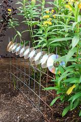 Paula Photoshoot (16 of 48) (City of Austin Office of Sustainability) Tags: gardening netzero netzerohero austin austintexas organic composting family recycling reducereuserecycle
