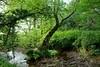 Dam of Pooh Sticks (smcnally24601) Tags: winnie pooh 100 acre wood sticks bridge country woods walk east sussex england britain british english summer landmark