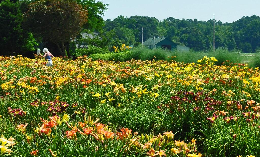 Sterrett Gardens (16)