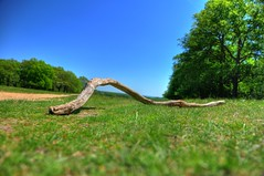 It's just a stick... (mendhak) Tags: park trees summer london field grass branch unitedkingdom earth path bluesky richmond soil twig stick lyingdown bracketing whyareyoureadingallofthesetags mendhakwebsite