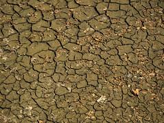 Hot, Hot, Hot (DaveKav) Tags: summer france hot mud dry olympus heat cracks moat loire heatwave e510 châteaudechenonceau driedmoat