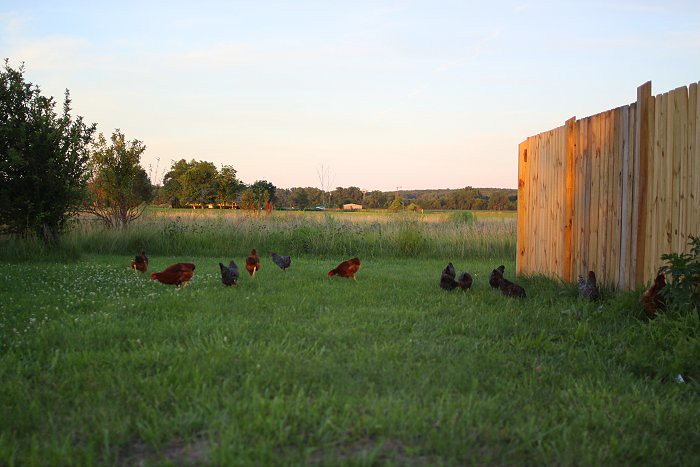 06-29-chickchick2