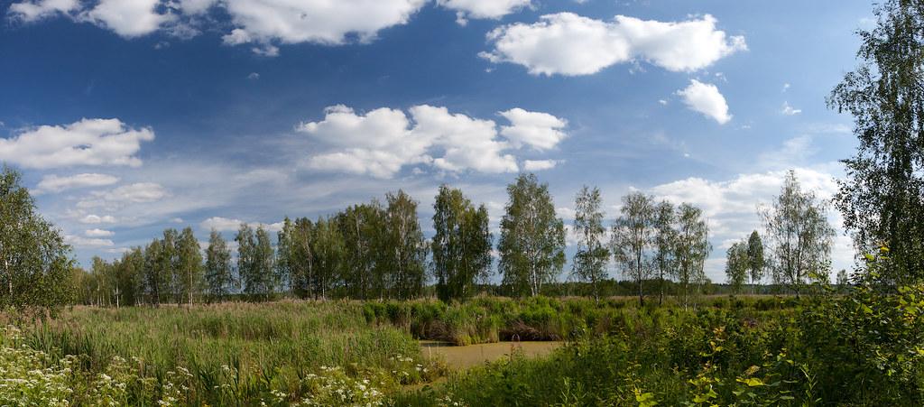 Birches on the bog
