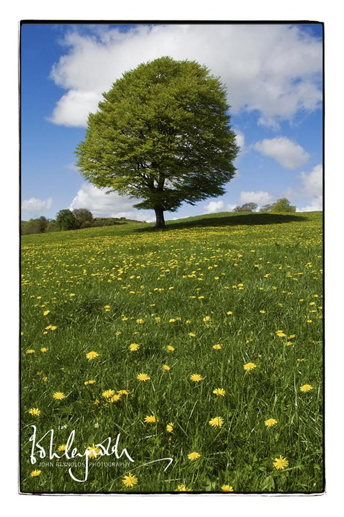 tree daffs