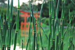 Reeds with Torii (thoth1618) Tags: park reed brooklyn reeds garden bbg brooklynbotanicgarden botanicgarden torii brooklynny brooklynusa memberssummerevening bbgmemberssummerevening brooklynbotanicgardenmemberssummerevening