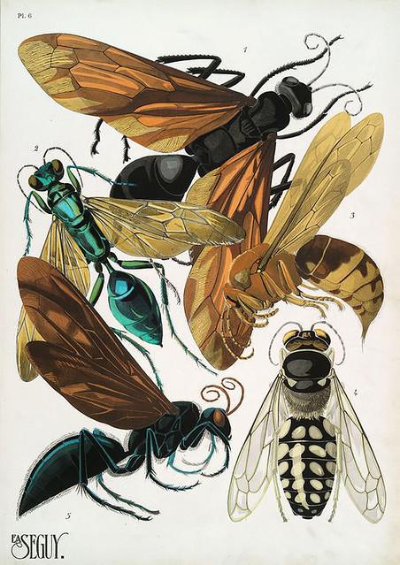 016-Insectes vingt planches en phototypie coloriées…1928- Eugene Alain Seguy