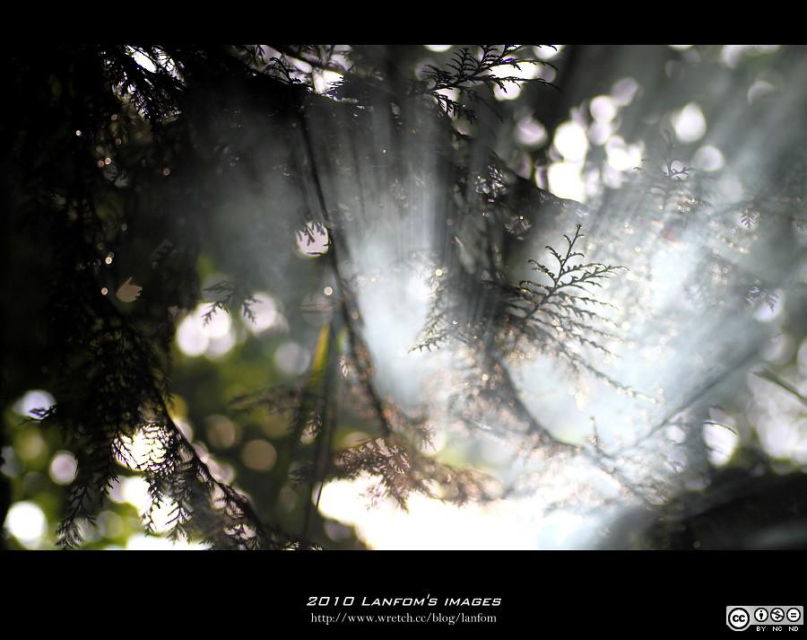 中橫光影生態之美
