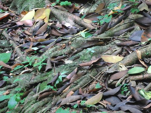 colores hojas