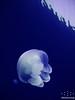 الصور الحاصله على المركز الرابع بمسابقة الرياده 2010 (Almarzouq) Tags: sea underwater مركز bader بدر almarzouq العمل مسابقه التطوعي المرزوق الرياده