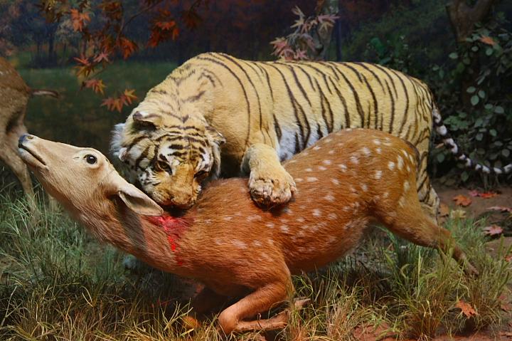 台北市立動物園台灣動物教育館0037