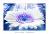 Mis divinos ojos te contemplan (Jose Luis Mieza Photography) Tags: flowers flores flower fleur fleurs flor benquerencia florews reinante jlmieza reinanteelpintordefuego joseluismieza