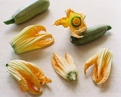 Zucchini Blossoms on Film (KarenWise) Tags: film mediumformat blossoms zucchini zucchiniblossoms