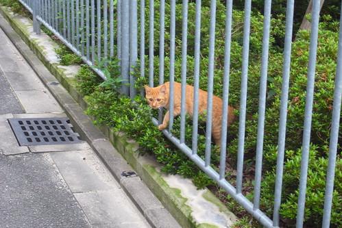 Today's Cat@2010-07-06