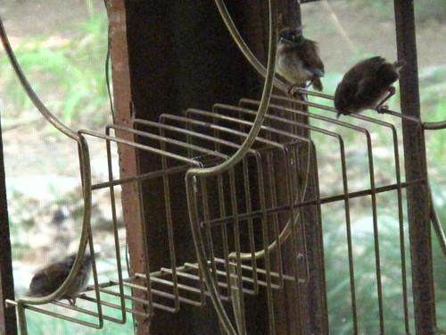 Baby Birds 12