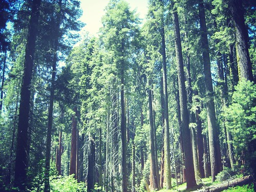 Sequoia National Forest_effected