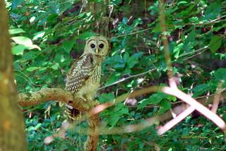 077-OWL 8