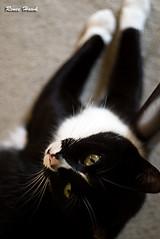 Howdy! (renee.hawk) Tags: cat kitty moritz kater