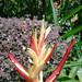 Samsung Galaxy S Outdoor Flower