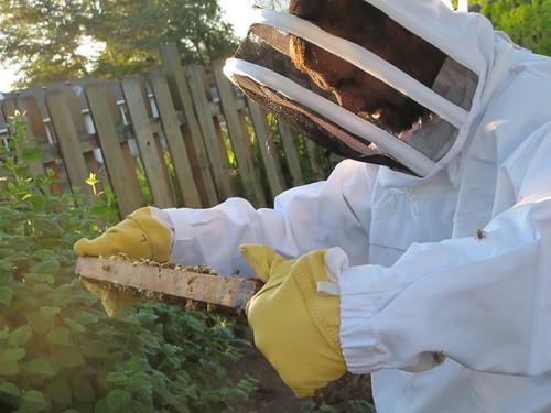 The master beekeeper