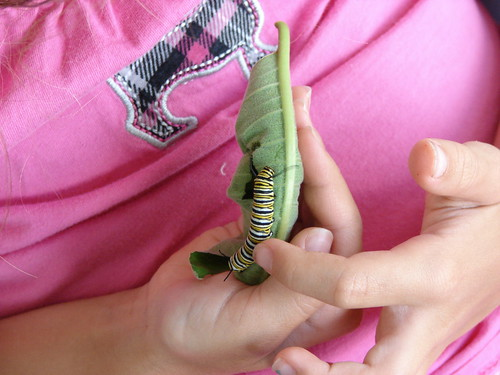 Daisy the Caterpillar