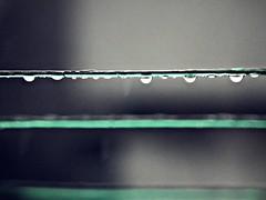 Have you ever seen the rain (Aybuke Calıskan) Tags: black green rain hope pain bokeh no touch rope more need try
