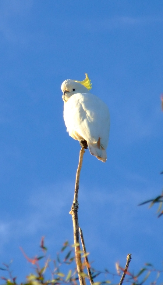 upset cockatoo