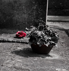 Fade relics (Jean-Michel Leclercq) Tags: red flower cemetery rose death remember fade relics nikonflickraward