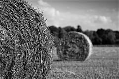 bale of straw (IV) (Romtomtom) Tags: blackandwhite bw field germany landscape bonn feld sw landschaft strohballen schwarzweis baleofstraw nikond300 2470mmf28g nikon2470mmafszoomnikkor28ged