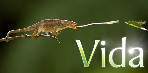 discovery_vida