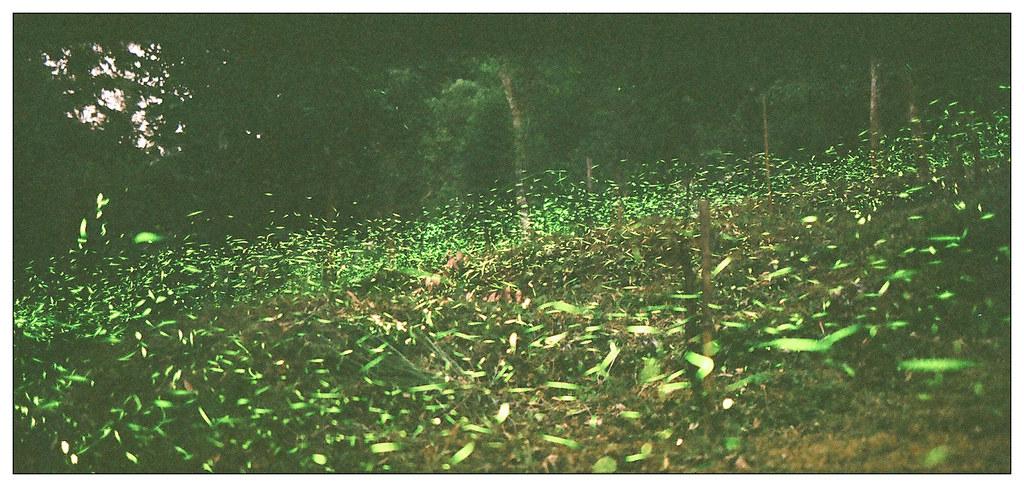螢火蟲 (一張流)